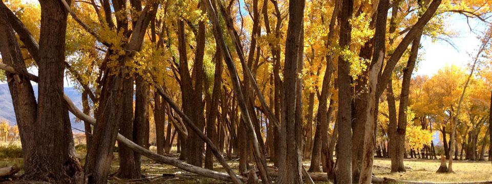 Autumn ©2015 Wynne Benti